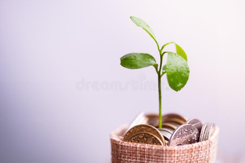 Monedas en el saco y la planta que brillan intensamente en monedas de los ahorros fotos de archivo