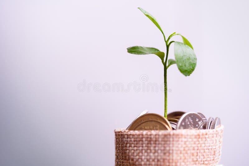 Monedas en el saco y la planta que brillan intensamente en monedas de los ahorros imagen de archivo libre de regalías