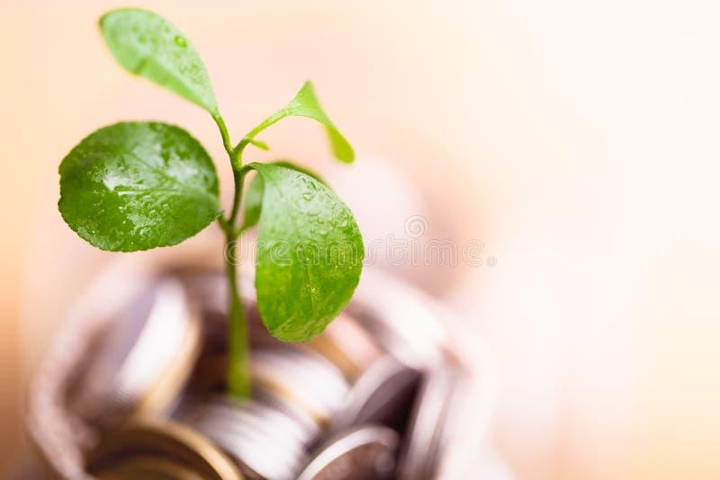 Monedas en el saco y la planta que brillan intensamente en monedas de los ahorros imagen de archivo
