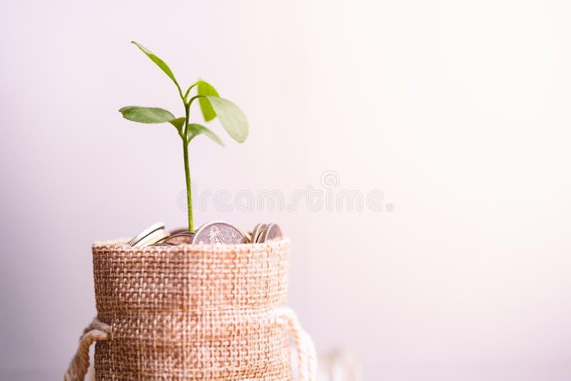 Monedas en el saco y la planta que brillan intensamente en monedas de los ahorros foto de archivo