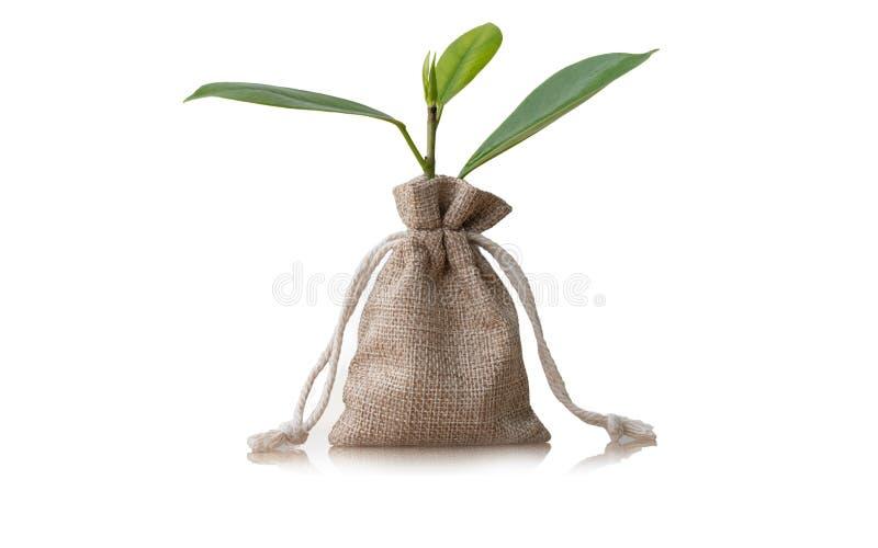Monedas en el saco y el pequeño árbol de la planta aislados en el fondo blanco fotografía de archivo libre de regalías