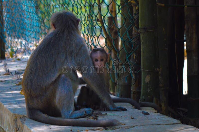 Moneky dziecko zdjęcie royalty free