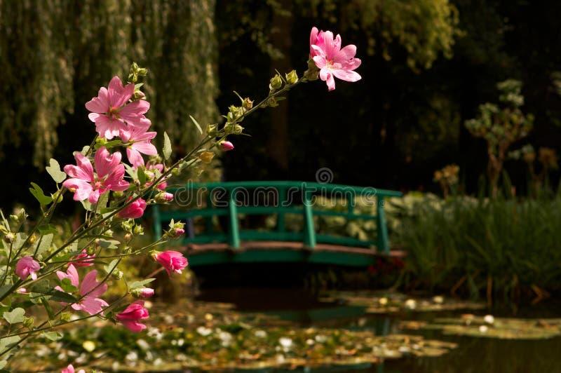 Monet pond stock images