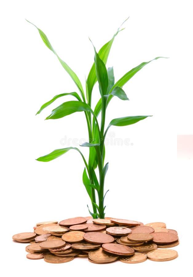 monet złota zieleni narastający garści badyle zdjęcie royalty free