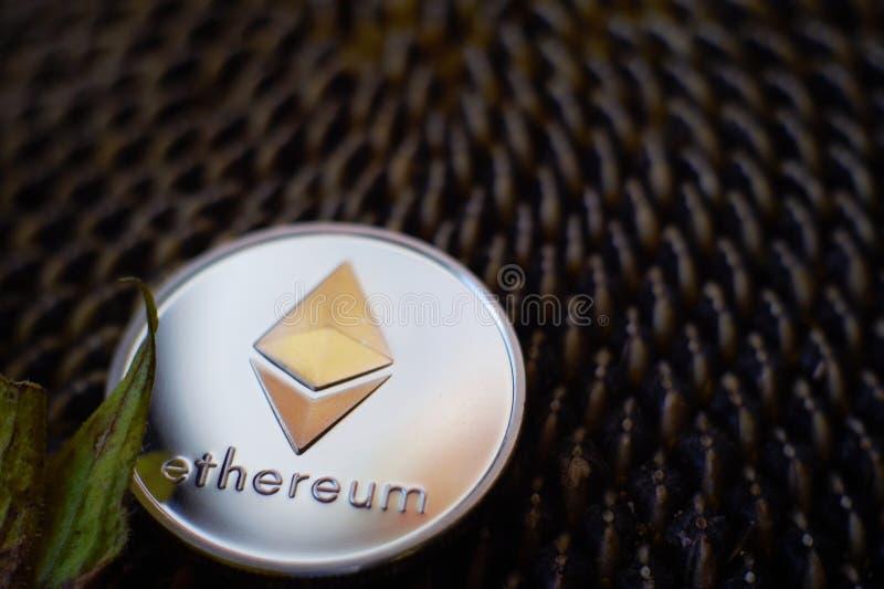 Moneta d'argento Sheeny di Ethereum sulla testa matura del girasole immagine stock