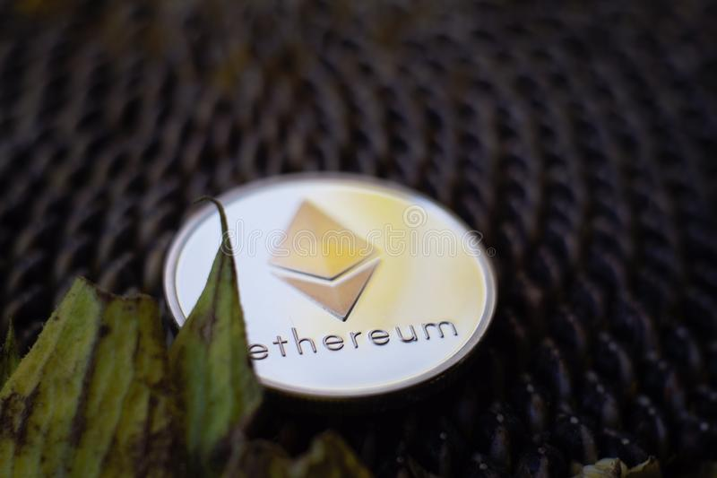 Moneta d'argento Sheeny di Ethereum sulla testa matura del girasole immagini stock