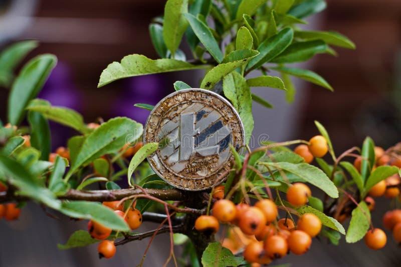 Moneta di Litecoin sull'albero fotografie stock libere da diritti