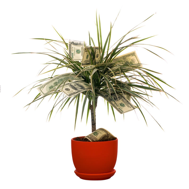 Download Monetary bush stock image. Image of nature, cultivated - 13202449