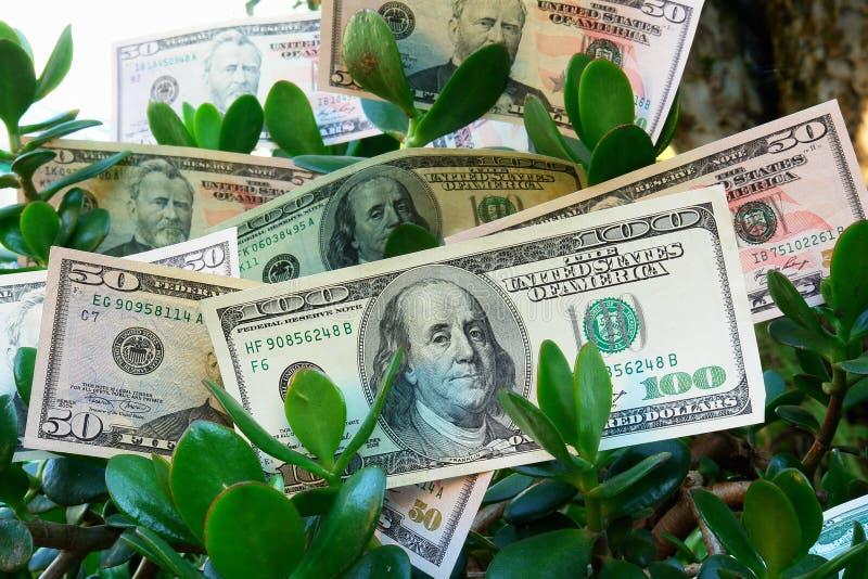 Monetary tree. Dollars growing on the monetary tree isolated on white background royalty free stock photos