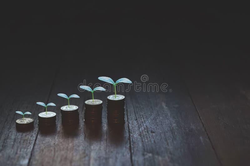 Monete disposte nelle file ed in piccoli alberi fotografie stock