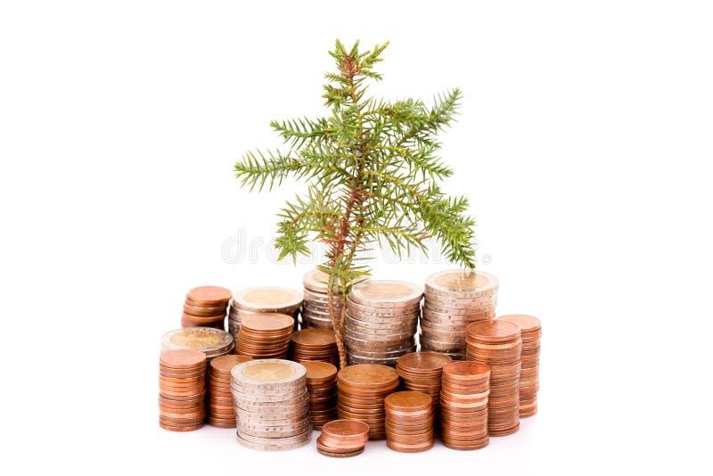 Monete e alberi immagini stock libere da diritti