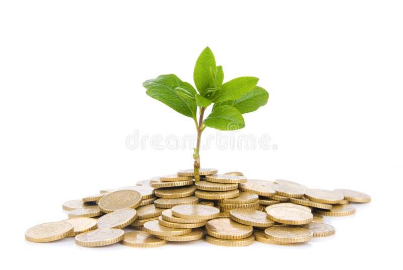 Monete e pianta, isolate su fondo bianco fotografia stock libera da diritti