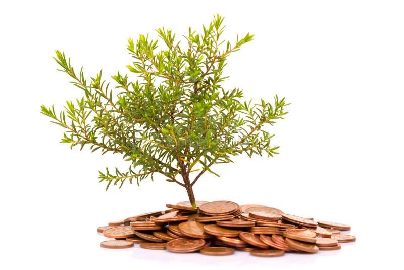 Monete ed albero fotografia stock libera da diritti