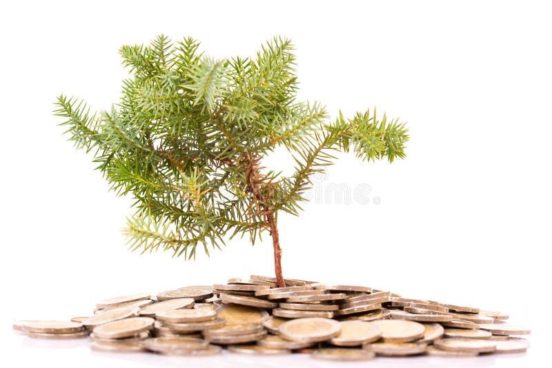Monete ed albero fotografie stock