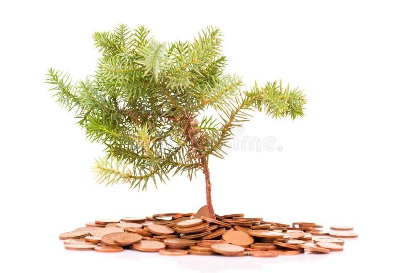 Monety i drzewo fotografia stock