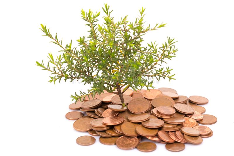 Monety i drzewo zdjęcia royalty free