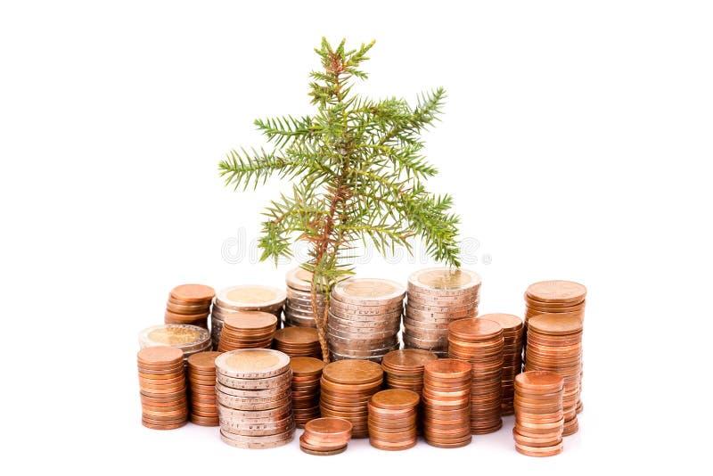 Monety i drzewo zdjęcia stock