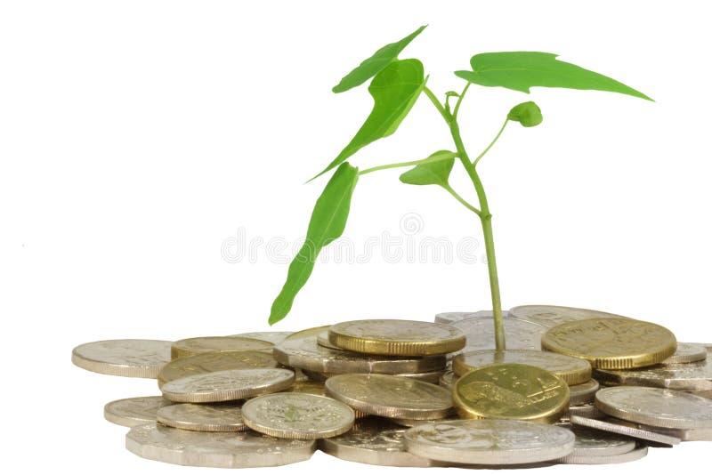 monety roślina zdjęcia stock