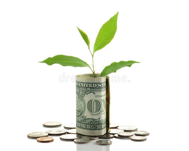 Money. USA money isolated in white background stock photo