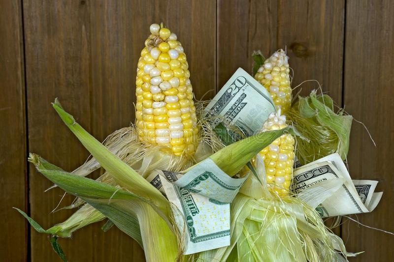 Money in corn on the cob bunch stock photography