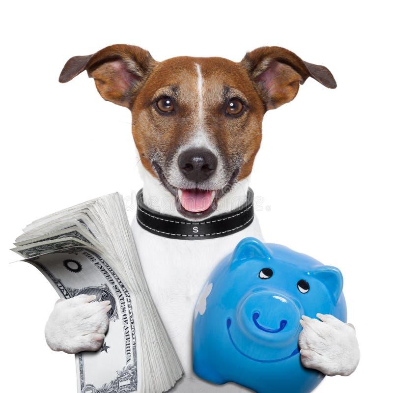 Money dog stock image