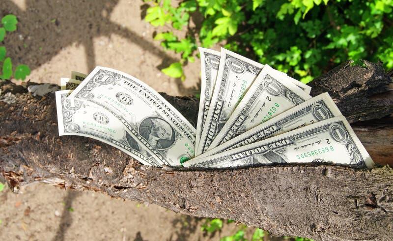 Money Dollars Tree Stock Photos