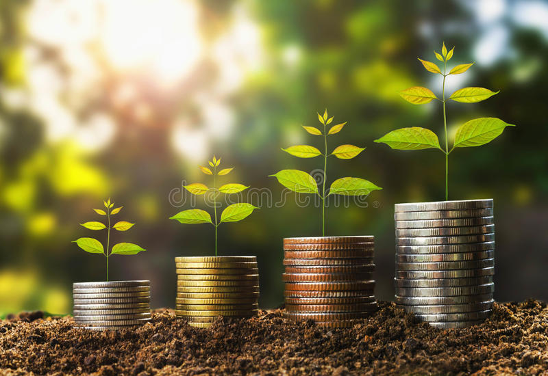 Money growht in soil and tree concept , business success finance. With sunshine in nature stock photo