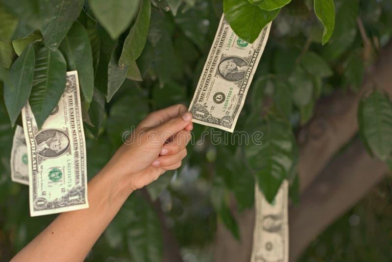 Money grows on trees stock photos