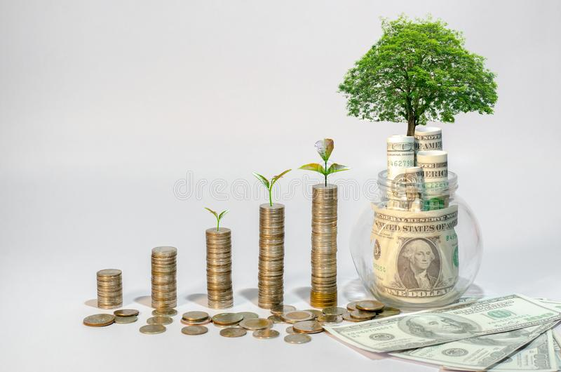 Money growth Saving money. Upper tree coins to shown concept of growing business royalty free stock photo