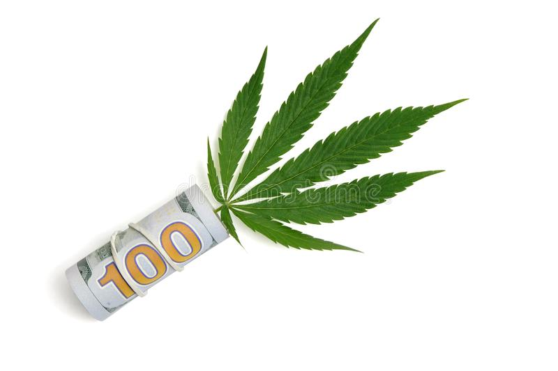 Money and marijuana. A sheet of cannabis sticks out of a hundred-dollar bill folded into a tube. Isolated, copy space. The concept. Money and marijuana. A sheet stock photo