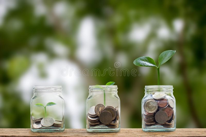 Money savings, investment, making money for future, financial wealth management concept. A coins in glass jar and step of growing. Tree plant on pile coins stock photo