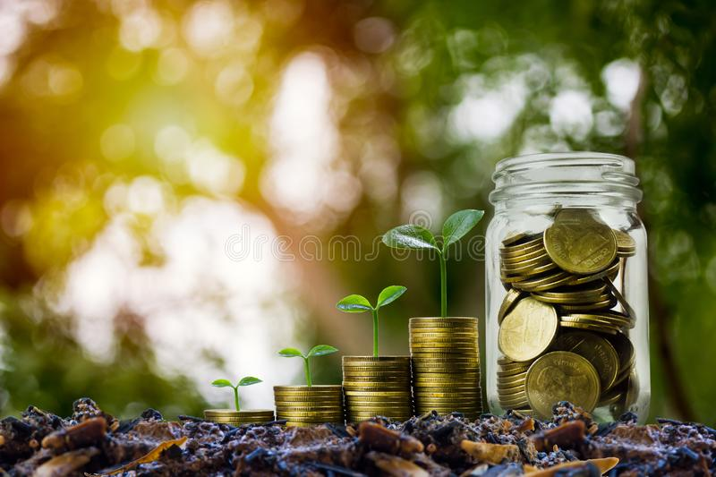 Money savings, investment, making money for future, financial wealth management concept. A coins in glass jar and step of growing. Tree plant on pile coins stock images