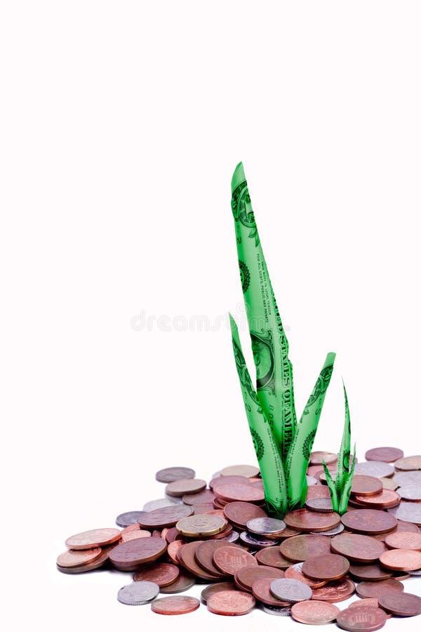 Money shoot growth stock photography
