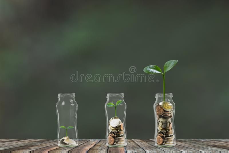 Money step by step growing, A stack of coins growing in 3 glass jar. Saving money, money investment concept royalty free stock images