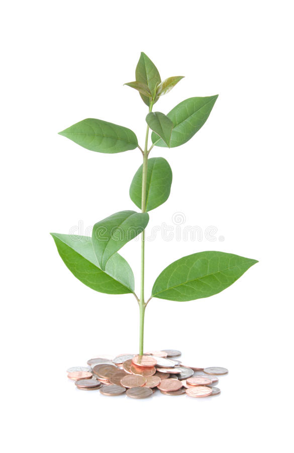 Download Money Tree stock photo. Image of leaves, isolated, cutout - 10334034