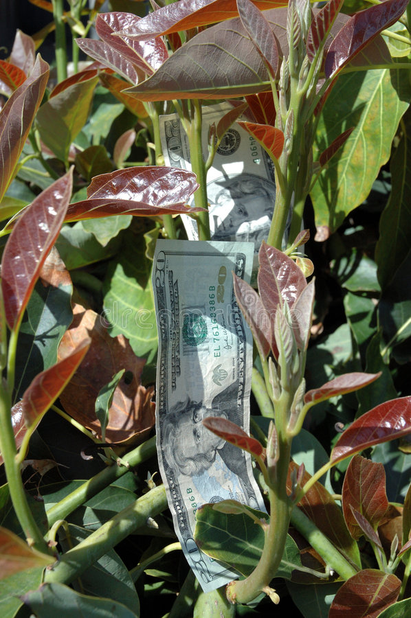Download Money tree stock photo. Image of career, moneytree, saving - 111770