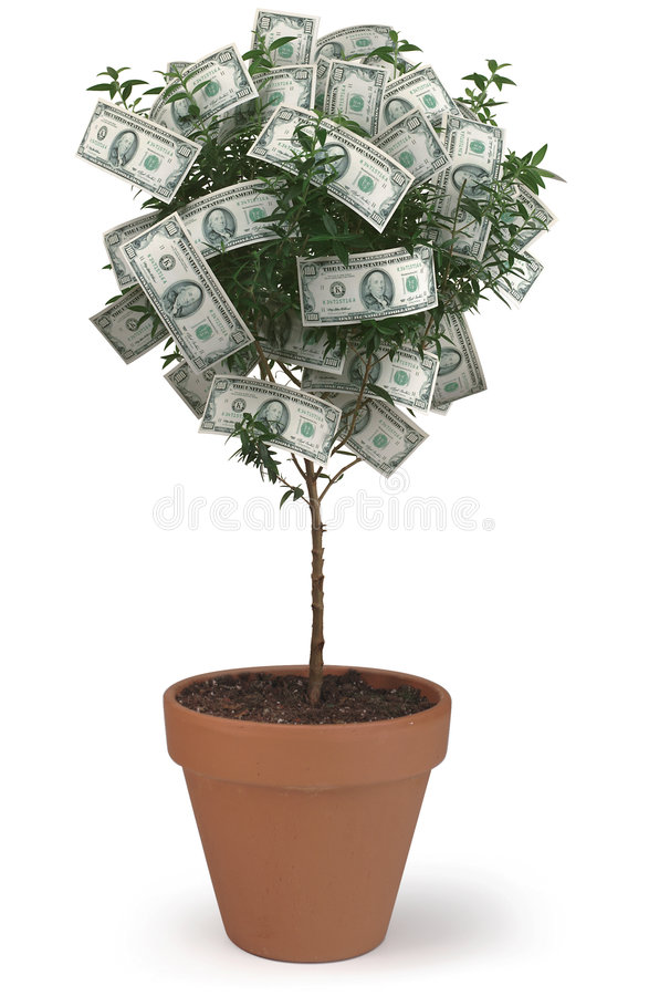 Money Tree. A Money Tree on White stock photo