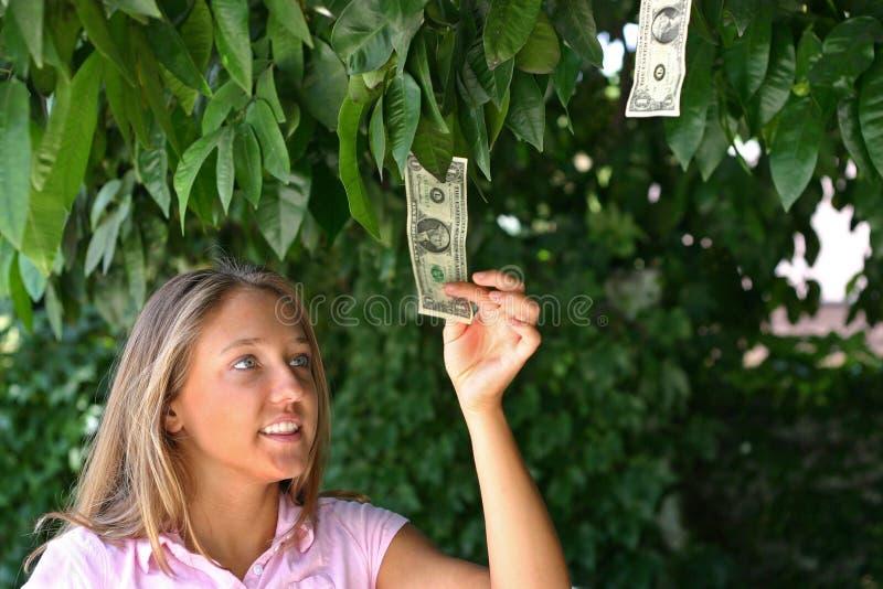 Download Money tree stock photo. Image of dollar, suntan, poverty - 145774