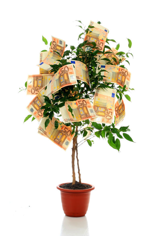 Money tree. royalty free stock photo