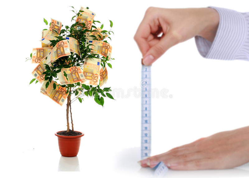 Money tree. Money tree isolated over white stock images