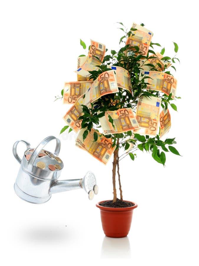Free Money Tree. Royalty Free Stock Photos - 17981758