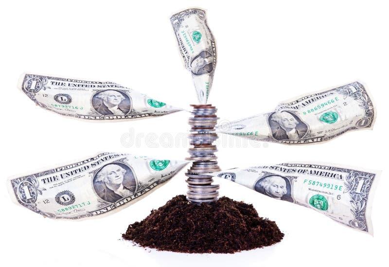 Money tree stock photography
