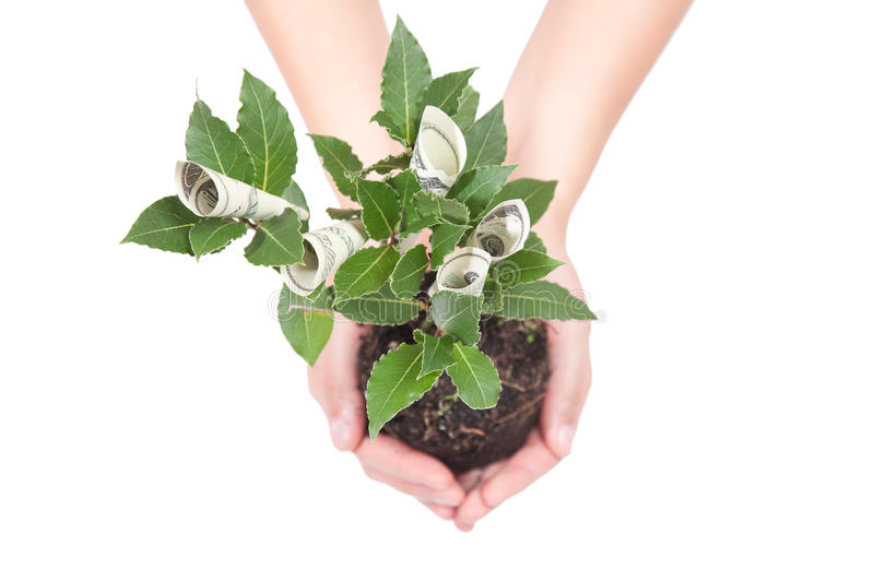Download Money tree stock photo. Image of income, growth, business - 22108334