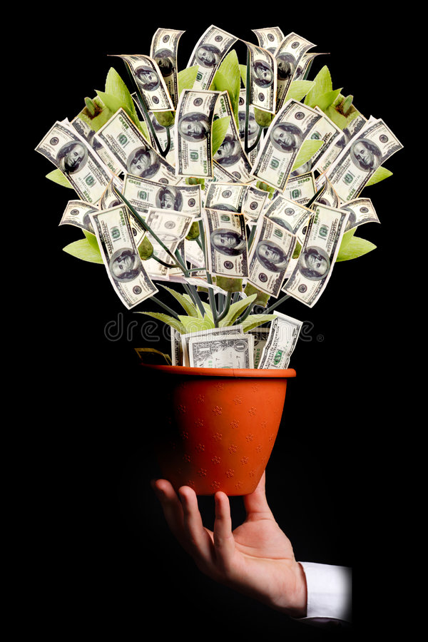 Money tree. Isolated on black royalty free stock image