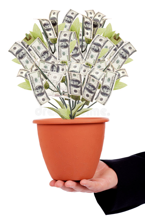 Money tree. Isolated on white royalty free stock photos