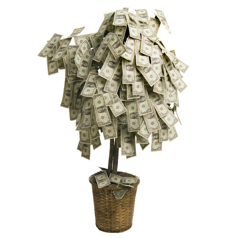 Money Tree. Growing dollars on white background royalty free stock photo