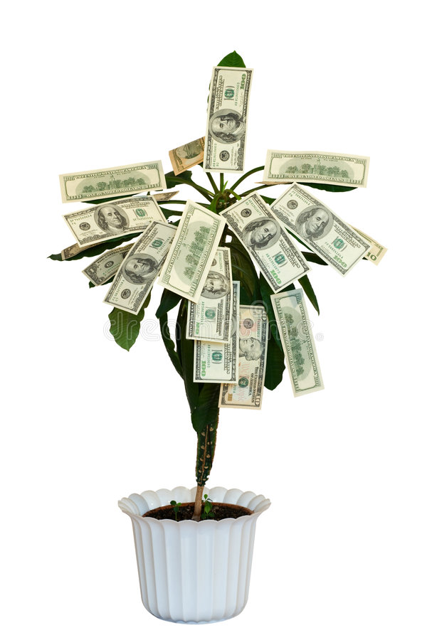 Money tree. Isolated on white royalty free stock photography