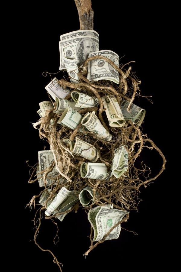 Download Money tree stock photo. Image of grow, tree, nest, fortune - 5257718