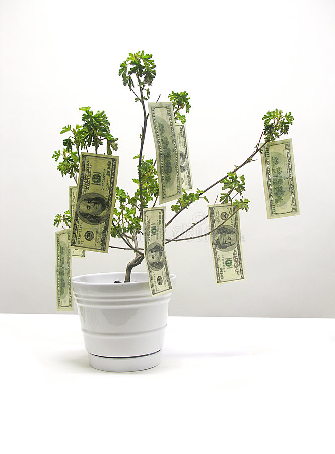 Money Tree. A photo of money growing from a tree stock photo
