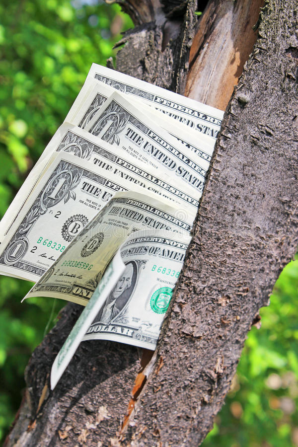 Download Money tree stock image. Image of growing, growth, economize - 31370305